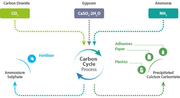 Carbon Cycle Process